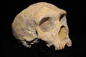 El neandertal de Neandertal . El Correo