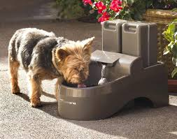 outdoor dog water bowl large fountain the green head 5