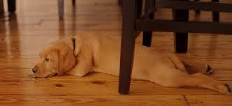 dublin hardwood flooring san ramon hardwood flooring danville hardwood flooring pleasanton hardwood flooring