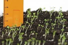 Square Foot Garden Plant Spacing Chart Plant Spacing Chart How Much Space Between Each Plant In