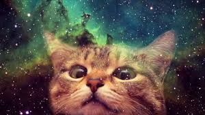 lots of cats tumblr. Modren Tumblr Cute Kitties And More D Throughout Lots Of Cats Tumblr O