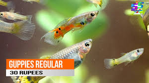 aquarium fish s in india with name s 2018