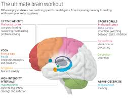 new finding different types of exercise affect different parts of that the brains of exercisers look different to those of their more sedentary counterparts is in itself not new we have been hearing for years that