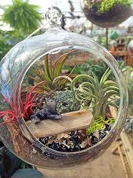 air garden. Wonderful Air Use Air Plants Tillandsia To Create Minigardens In A Bubble Crafts  Gifts For Air Garden B