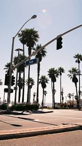 palm trees tumblr. Palm Trees Tumblr. 6 Intended Tumblr E