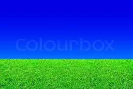Fresh green grass and blue sky background Stock Photo Colourbox