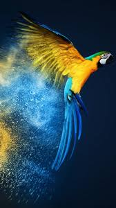 Parrot iPhone Wallpapers - Top Free ...