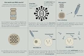 """Eos Wetenschap - """"Traditionele"""" vaccins bevatten dode virussen of stukjes  viruseiwit. Die trainen ons immuunsysteem. De RNA-vaccins van o.a. Pfizer  en Moderna laten ons lichaam zelf een viruseiwit produceren."""