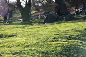 Grass Couch A Quick Guide To Couch Grass Mckays Grass Seeds Buy Grass Seed