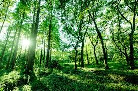 「森のイラスト 無料」の画像検索結果