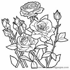 Download or print flower bouquet is made of roses coloring page for free plus other related flower bouquet coloring page. Roses To Print And Color Rose Coloring Pages Flower Coloring Sheets Flower Coloring Pages