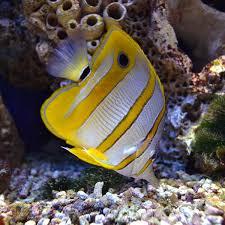 marine fish and invertebrates