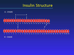 Insulin Stability Chart Insulin Pharmacology Therapeutic Regimens And Principles