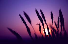 urple sunset wallpapers hd