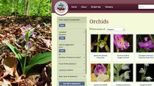 Go Orchids A Guide To Identifying Orchids