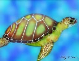 Small Picture My colored pencil drawing of a sea turtle