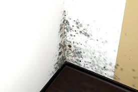 How To Kill & Remove Mold From Walls And Ceilings - CleaningInstructor.com