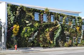 The living wall at the Singapore Institute of Technology & Education -  images courtesy of Victor