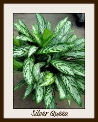 best low light office plants. Indoor Plants Low Light | Earth \u0026 Style Blog - Avant Garden Best Office O