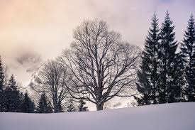 Cold Light Photography Trees Tree Winter Snow White Cold Light Sky Clouds Natu