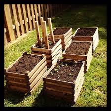 vegetable garden in wooden crates