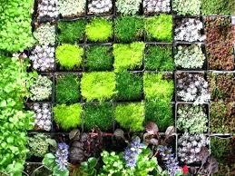 wall of garden innovation ideas hanging wall garden design download vertical  ideas garden wall planters plastic
