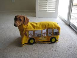 Image result for Image, dog catching bus