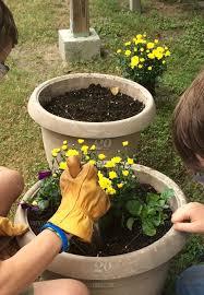 flowers planting gardening pots