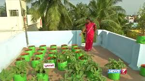Balcony Kitchen Garden How To Grow Vegetables In A Container Or Pots On The Terrace