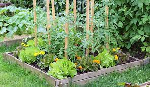 vegetable gardening learn how to plan