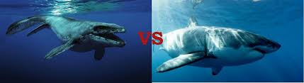 megalodon shark compared to t rex. Interesting Shark Mosasaurus Vs Megalodon Inside Shark Compared To T Rex D