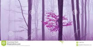 Mist Op De Bos Gekleurde Mysticusachtergrond Magisch Forestmagic