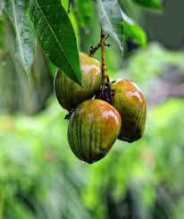 Mango Usa Size Chart Mango Wikipedia