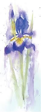 a pretty watercolour painting of an iris flower
