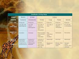 Kingdoms Of Biology Chart E The Six Kingdoms Chart In Your Notes Ppt Download