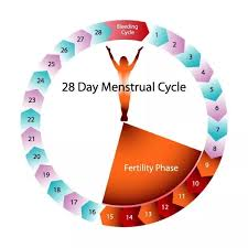 How Many Days After Your Period Are You Most Fertile Quora