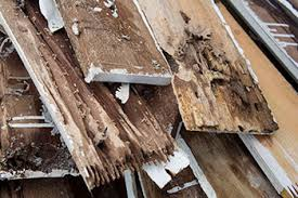 most homeowner s insurance does not cover termite damage termites cause billions of dollars in damage to homes each year it is estimated that termites