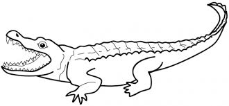 Small Picture Crocodile Coloring Pages Art Binder Pinterest Alligators