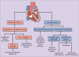 Right Vs Left Sided Heart Failure Chart Signs Of Congestive Heart Failure Chart Usdchfchart Com