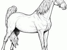 Small Picture Marvellous Design Horse Color Pages 12 Lovely Ideas Horse