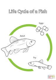 Kalan Elämän Kulku Life Cycle Of