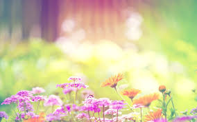 flower background images and wallpapers ...
