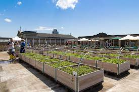 french study rooftop agriculture shows