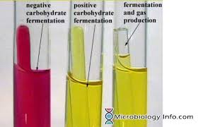 Phenol Red Colour Chart Phenol Red Fermentation Test Procedure Uses And