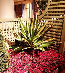 Small Picture Succulent Garden Design