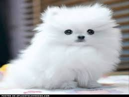 White Fluffy Dog Memes Top 50 Funny Dogs Video - YouTube via Relatably.com