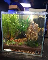 Nano Aquarium Design Ex Display Aqua Nano Cube Aquarium Complete Set