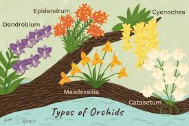 20 Types Of Orchids To Use As Houseplants