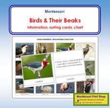 Bird Beak Chart Animal Adaptation Birds And Their Beaks