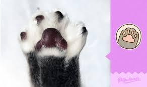 Pfote Hoch Diese Katze Macht Facebook Sticker Pusheen Konkurrenz